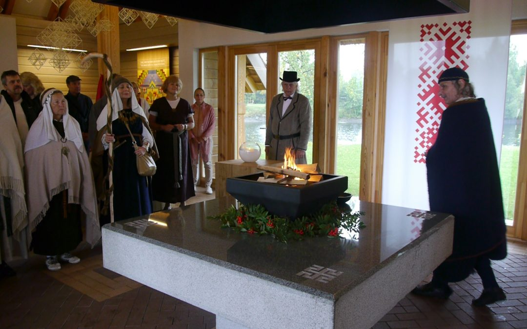 Baltų Krivulė Latvijoje
